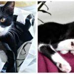 Женщина подобрала котенка с витилиго и показала его преображение