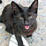 10 звуков кошек - и что они означают?