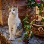Медленное моргание может улучшить Ваше общение с кошкой