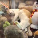 Мужчина увидел в игровом автомате игрушку кота и попытался ее выиграть - но она неожиданно зашевелилась