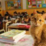 Котик жил в школе и учился вместе с ребятами, все были счастливы, пока о питомце не узнали мамочки-активистки - кота выгнали
