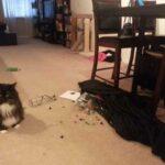 Парень гонялся за котом и устроил погром в квартире, полицейским он сказал, что это сделали бандиты - чем закончилась история