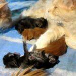 Кот очень любил кошку, ухаживал за ней и ласкал, но однажды она родила котят совсем другого цвета - он стал ее подозревать