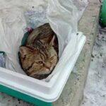 В Красноярске кота посадили в кошачий туалет, закутали в пакеты и выстовили на помойку, прицепив к нему записку