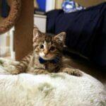 Дружба с псом научила котенка, который из-за травмы не мог нормально ходить, передвигаться и даже играть в догонялки