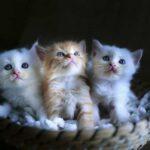 Новое исследование показывает, что кошки помогают детям с аутизмом