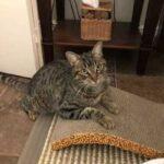 Котик-гуляка заблудился в лесу и одичал - спустя три месяца он нашелся, но был уже совсем другим питомцем