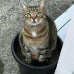 Зачем толстый котик притворяется и обманывает своих хозяев в том, что не может пролезть в кошачью дверцу, сделанную для него