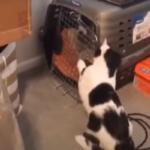 Но у него же лапки... - котенок открыл дверцу переноски и выпустил двух своих друзей-щенков, запертых хозяевами