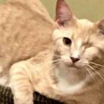 Как одноглазый котик помог одной семье справиться с тяжелой потерей и вернул к жизни их второго питомца