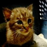 Мужчина спас маленького плачущего котенка, но питомец оказался вовсе не таким уж беззащитным и слабым