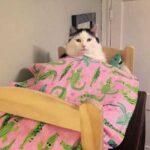 Кошка три года почти безвылазно просидела в клетке - ей нашли новую хозяйку, но девушку смущает странное поведение питомицы
