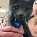 Как котенок, живущий в приюте, помог парню попросить у возлюбленной руку и сердце, а потом стал жить в этой семье