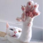 """Кошку с несколькими """"необычностями"""" хозяева выбросили на улицу - но она нашла новых и стала настоящей звездой соцсетей"""
