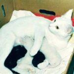 Кошка с котенком в зубах скреблась в дверь к хозяину, а когда тот пустил, спрятала малыша и бросилась за другими своими детьми