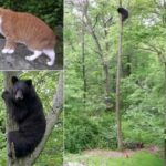 Маленький мишка зашел в охотничьи угодья большого рыжего кота - кот так рассердился, что мише пришлось помогать людям