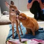 Котик, переживший опасности и чудом оставшийся в живых, теперь помогает другим питомцам приюта, и даже диким животным