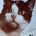 Единственная в истории кошка, которая побывала в космосе - как закончился ее полет и почему ее забыли