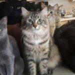 """В приют позвонила женщина и попросила забрать сотню ее котов - на вопрос, откуда их столько, она ответила, что завела """"случайно"""""""
