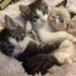 На маму-кошку и ее котят напал дикий енот - три малыша выжили, но один теперь имеет несколько необычный внешний вид